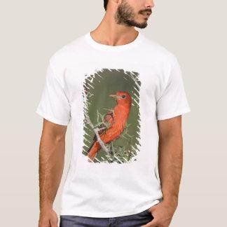 T-shirt Tanager d'été, rubra de Piranga, consommation