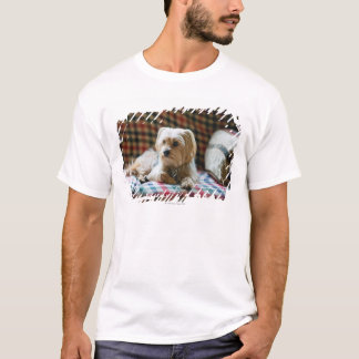 T-shirt Terrier se trouvant sur la couverture checkered