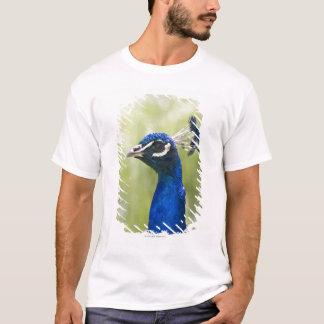 T-shirt Tête de paon