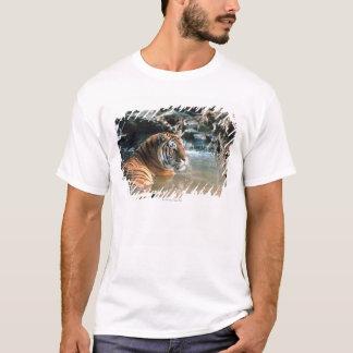 T-shirt Tigre dans l'eau