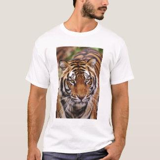 T-shirt Tigre de Bengale, Panthera le Tigre