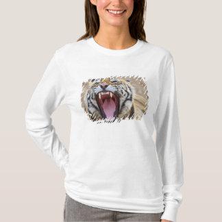 T-shirt Tigre de Bengale royal baîllant ; Ranthambhor