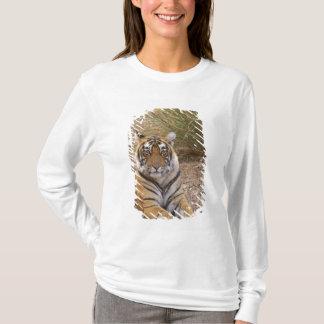 T-shirt Tigre de Bengale royal se reposant en dehors de la