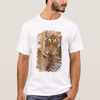 T-shirt Tigre de Bengale royal sortant de l'étang de