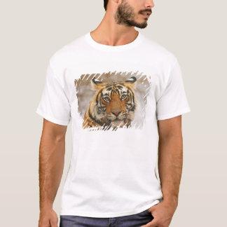 T-shirt Tigre de Bengale royal - un portrait, Ranthambhor