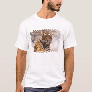 T-shirt Tigre de Bengale royal - une fin, Ranthambhor 2