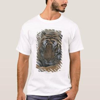 T-shirt Tigre de sommeil