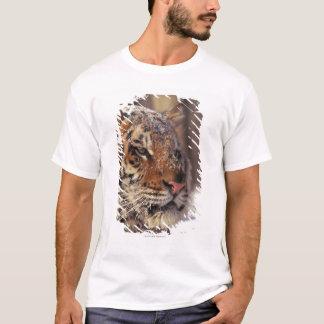 T-shirt Tigre sibérien