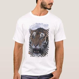 T-shirt Tigre sibérien baîllant
