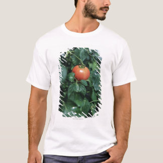 T-shirt Tomate