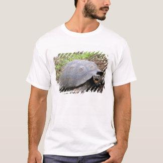 T-shirt Tortue de Galapagos avec la bouche ouverte