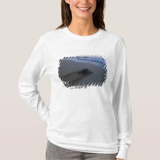 T-shirt Tortue de mer verte, femelle (de mydas de