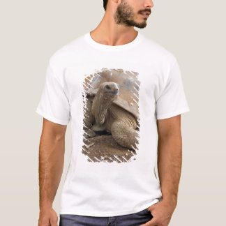 T-shirt Tortue de terre de Seychelle Aldabran