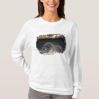 T-shirt Tortue verte, (mydas de Chelonia) femelle de