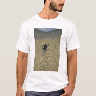 T-shirt Tortue verte, (mydas de Chelonia), hatchling