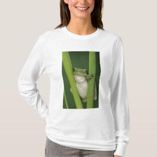 T-shirt Treefrog vert, Hyla cinerea, adulte, lac
