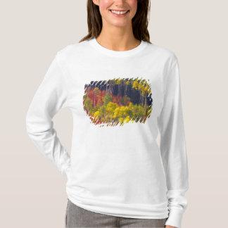 T-shirt Trembles colorés en canyon Utah de Logan dans