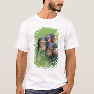 T-shirt Trois jeunes chimpanzés (troglodytes de casserole)