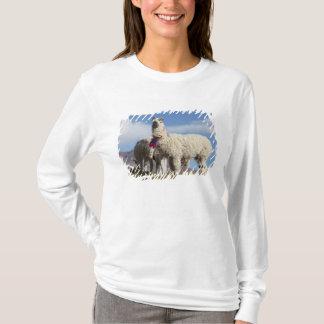 T-shirt Troupeau décoré de lama dans le Puna, montagnes