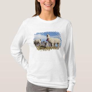 T-shirt Troupeau décoré de lama dans le Puna, montagnes 3