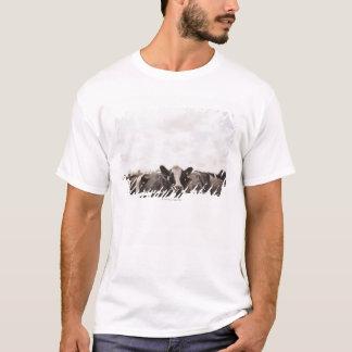T-shirt Troupeau des bétail et du ciel obscurci 2