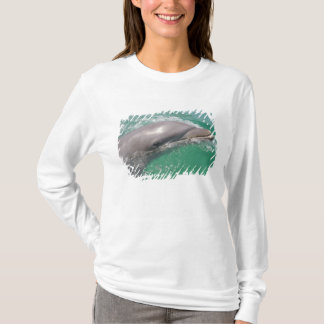T-shirt Truncatus de Tursiops de dauphins de Bottlenose)
