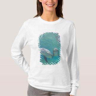 T-shirt Truncatus de Tursiops de dauphins de Bottlenose) 6