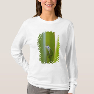 T-shirt Un anole vert est un lézard arborescent