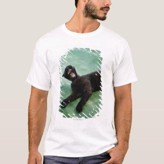 T-shirt Un chat de baîllement
