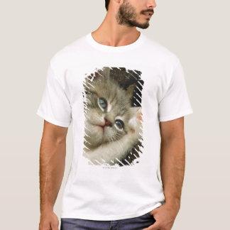 T-shirt Un chaton, avec de grands yeux bleus, s'étend