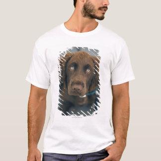 T-shirt Un chien brun