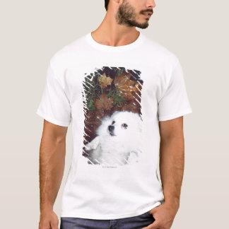 T-shirt Un chien se trouvant sur les feuilles d'automne