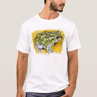 T-shirt Un crapaud de spadefoot