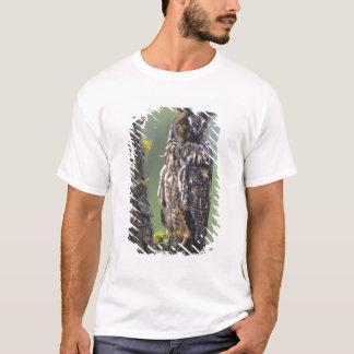 T-shirt Un duc était perché sur une branche d'arbre près