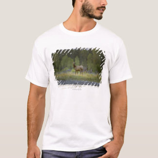 T-shirt Un élan femelle se tient regardant