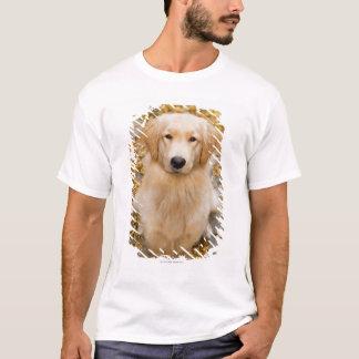 T-shirt Un golden retriever d'ans, portrait