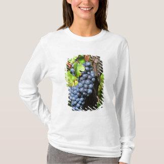 T-shirt Un groupe de merlot mûr de raisins sur une vigne
