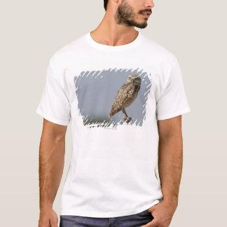 T-shirt Un hibou creusant se reposant sur un courrier de
