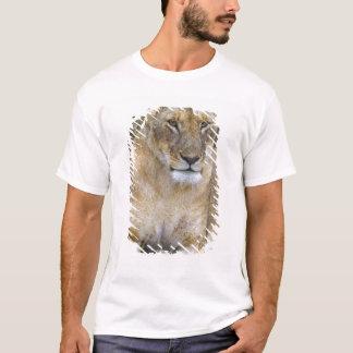 T-shirt Un lion reposant la haute herbe du Maasai