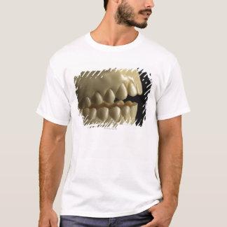 T-shirt Un modèle dentaire