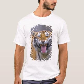T-shirt Un tigre d'hurlement, Taïwan, zoo de Taïpeh,