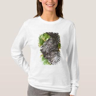 T-shirt Une branche d'une vigne très vieille avec noueux