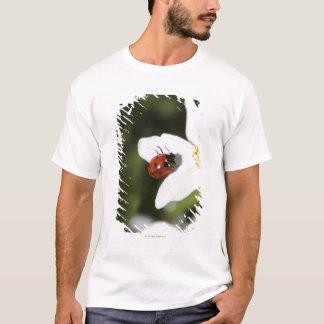 T-shirt Une coccinelle sur une anémone en bois Stockholm
