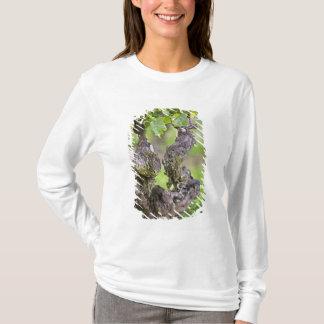 T-shirt Une vigne très vieille dans le vignoble de Clos de