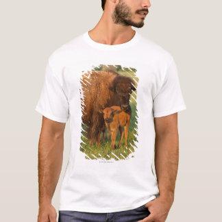 T-shirt Vache à bison américain et veau, le Dakota du Nord