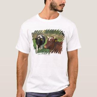 T-shirt Vache frôlant, Suède