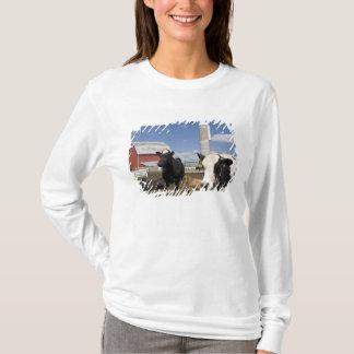 T-shirt Vaches devant une grange et un silo rouges à une