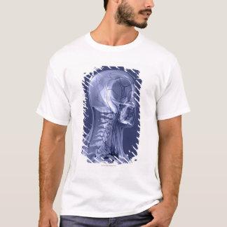 T-shirt Vaisseaux sanguins de tête et de cou
