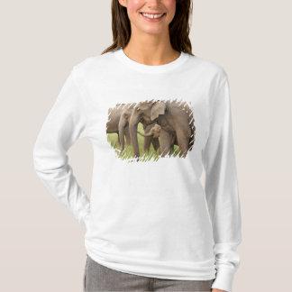 T-shirt Veau d'éléphant d'Asie jouant avec des adultes,