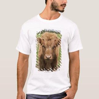 T-shirt Veau des montagnes de bétail, près de Dufftown,